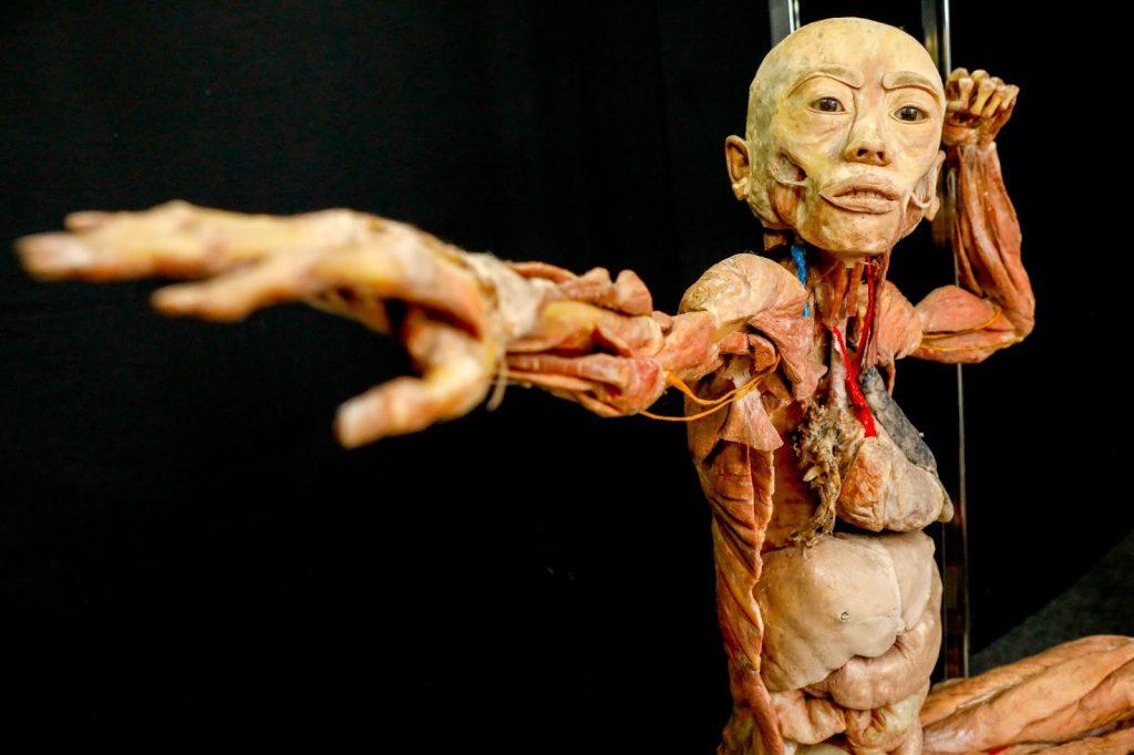 corpo humano exposição